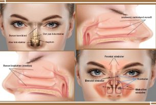 Nose Anatomy And Function